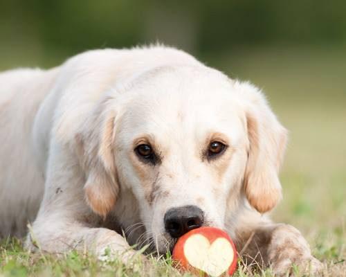 Benny Herzenshund