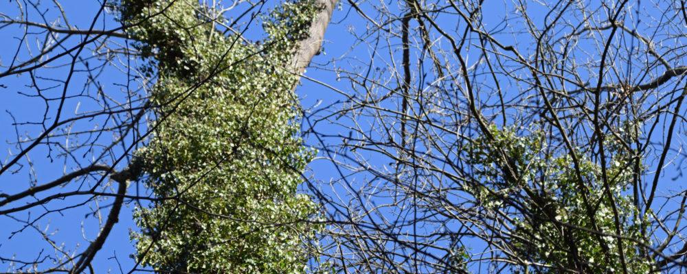 Baum Faxen 3