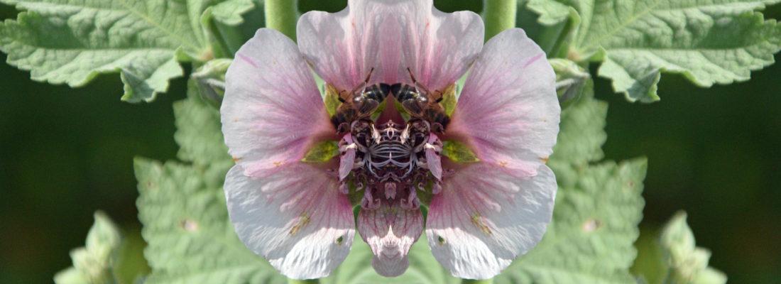 Spiegelung Biene Bienchen