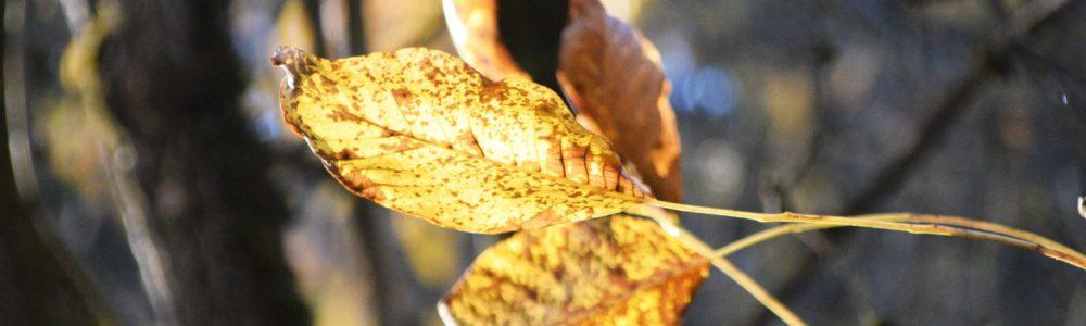 Herbstblatt im Licht