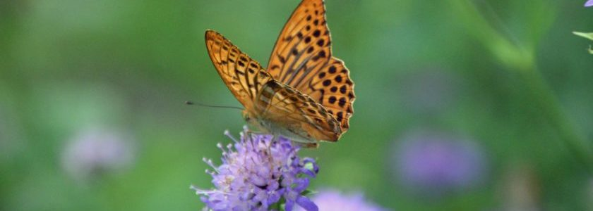 Schmetterling flieg 7
